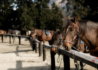 Meet The Team - High Country Horses